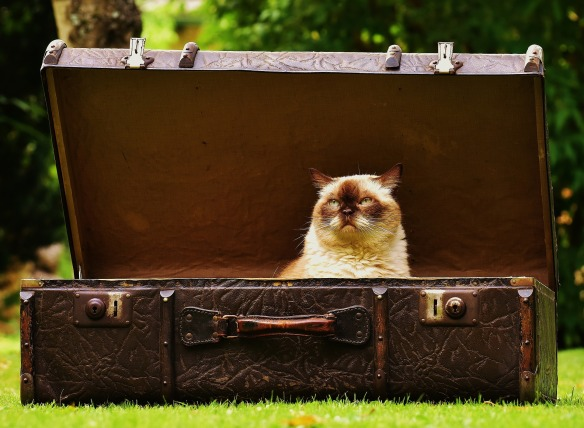 cat in trunk by alexas-fotos